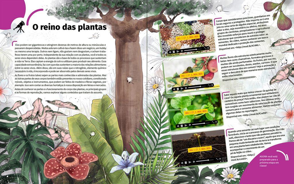 o reino das plantas